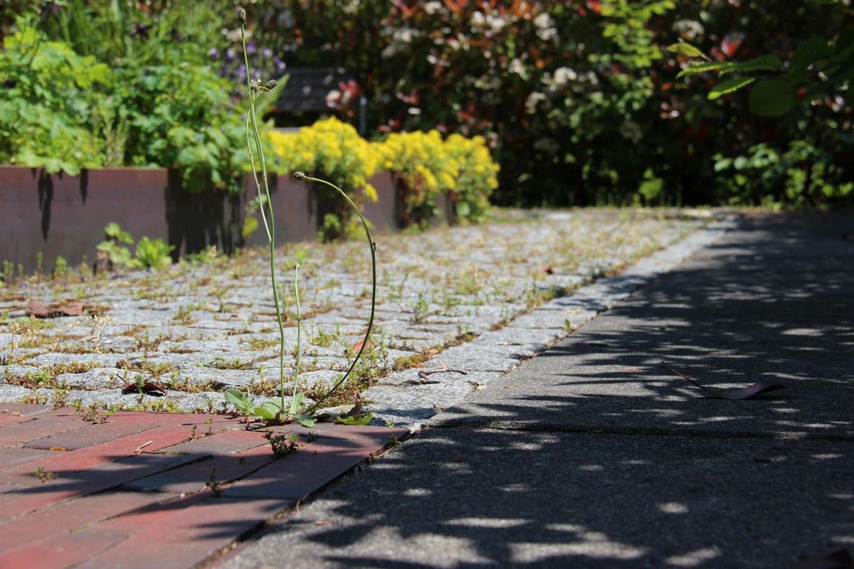 Verschiedene Bodenbeläge sorgen für Abwechslung. Vergrösserte Ansicht
