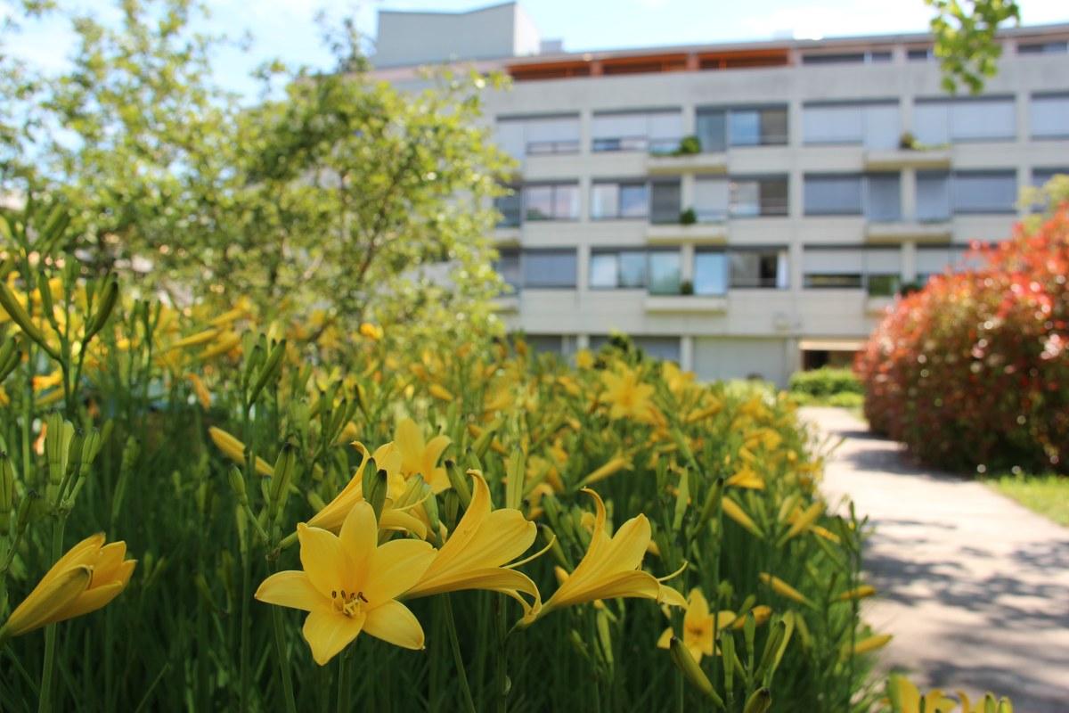 Blühende Blumen an fast jeder Ecke. Vergrösserte Ansicht