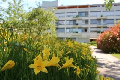 Blühende Blumen an fast jeder Ecke