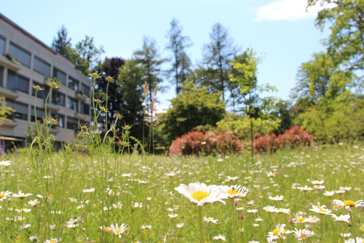 Gartenoase mitten im Viererfeld. Vergrösserte Ansicht