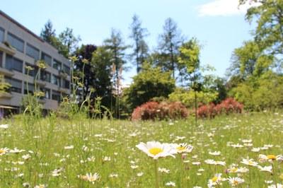 Gartenoase mitten im Viererfeld