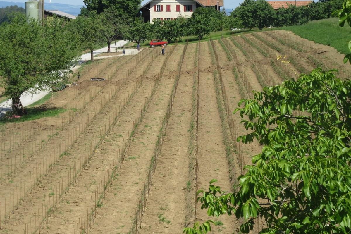 Pflanzarbeiten 1. Vergrösserte Ansicht