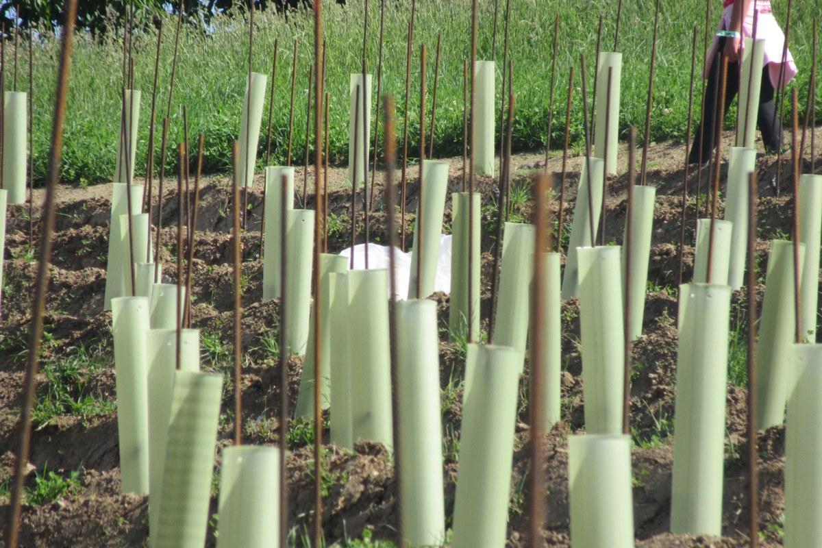 Pflanzarbeiten 2. Vergrösserte Ansicht