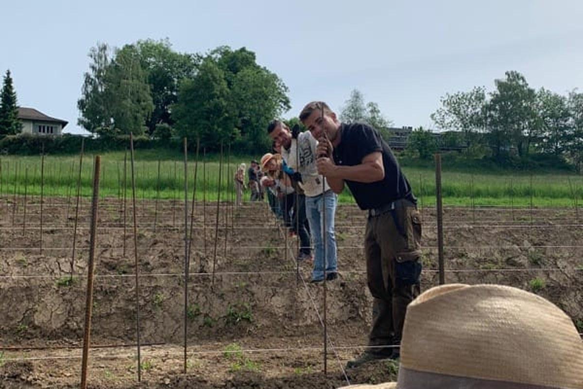 Pflanzarbeiten 3. Vergrösserte Ansicht
