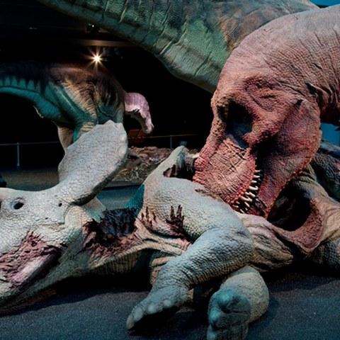 2-ausstellung-t-rex-kennen-wir-uns-ku3b0199-g-1.jpg
