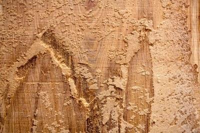 R20 steht für Holz aus der Region; höchstens 20 Kilometer vom Bundeshaus entfernt